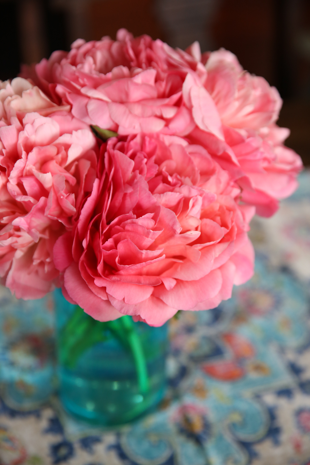 Coral Charm Semi Double Peony