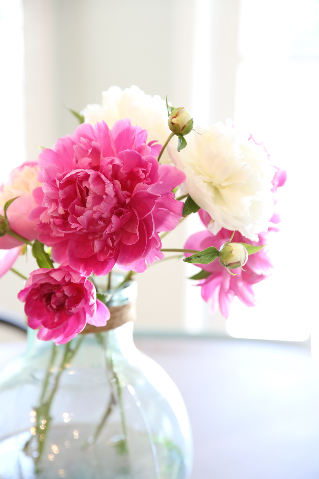 Fully Bloomed Peonies