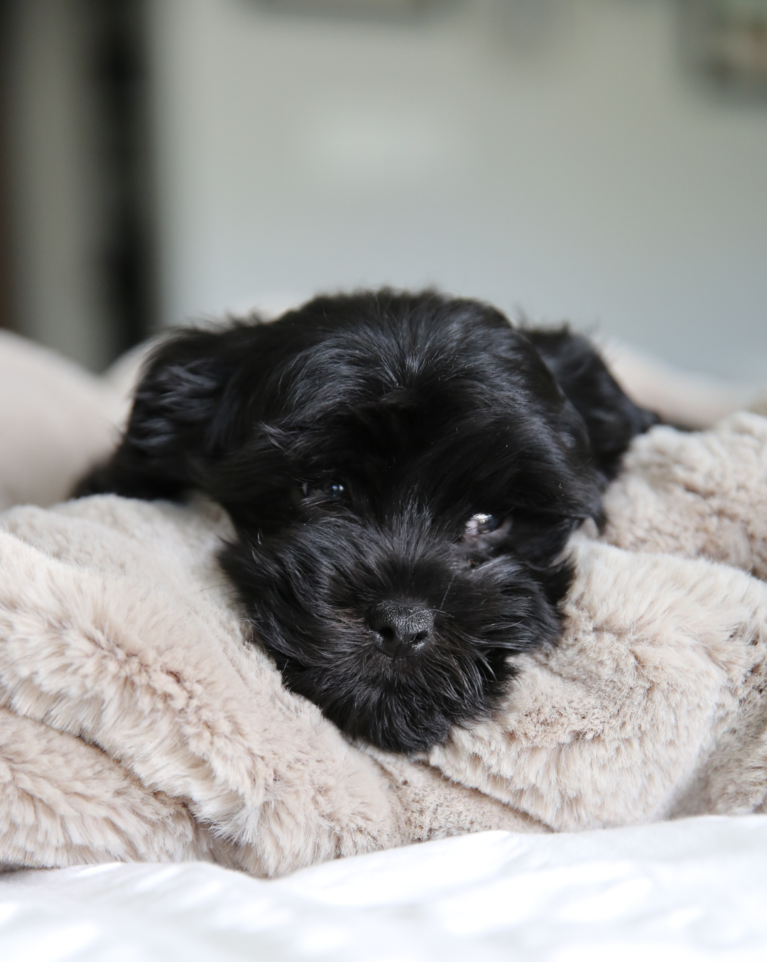 puppy for our family