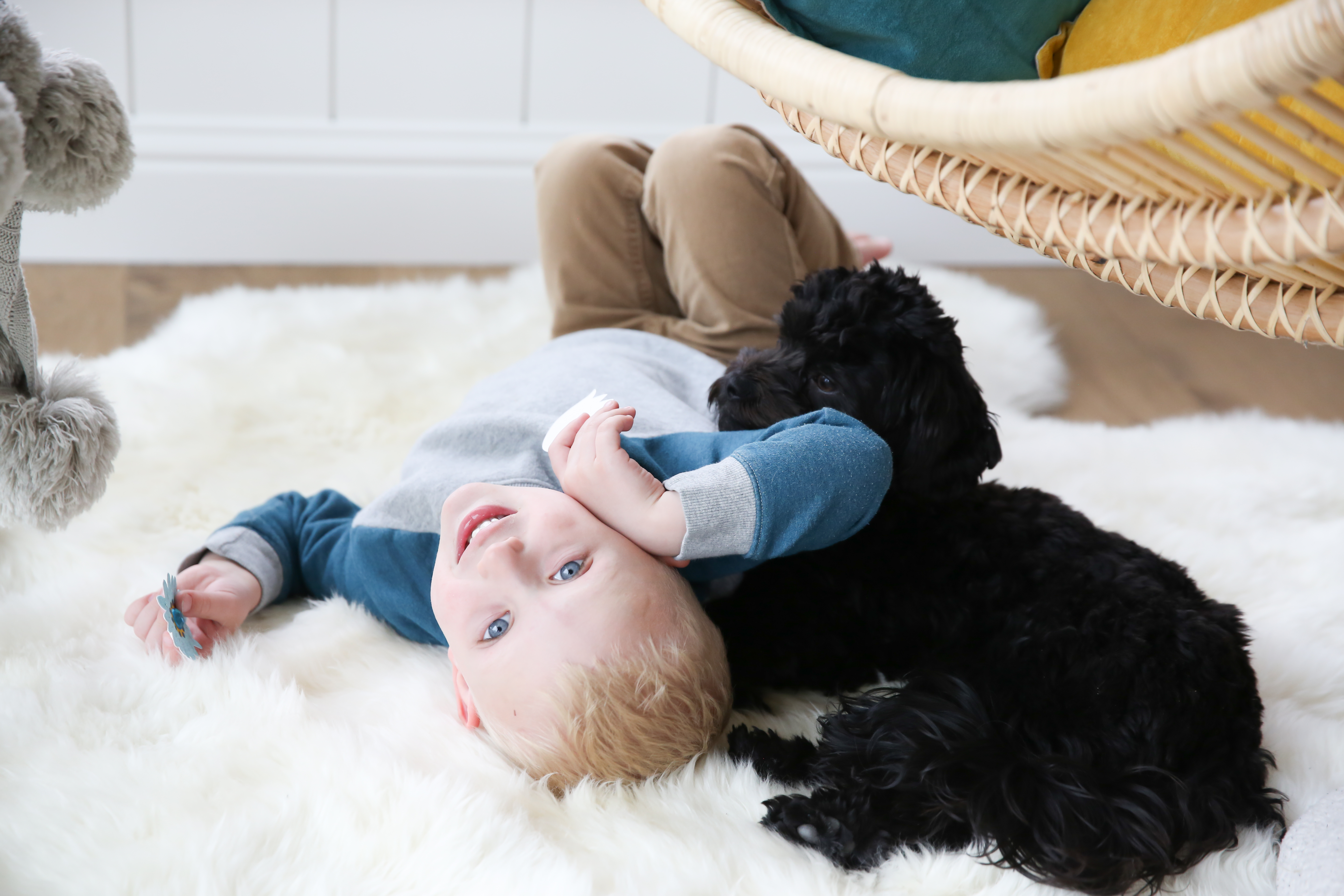 havanese puppy with kids
