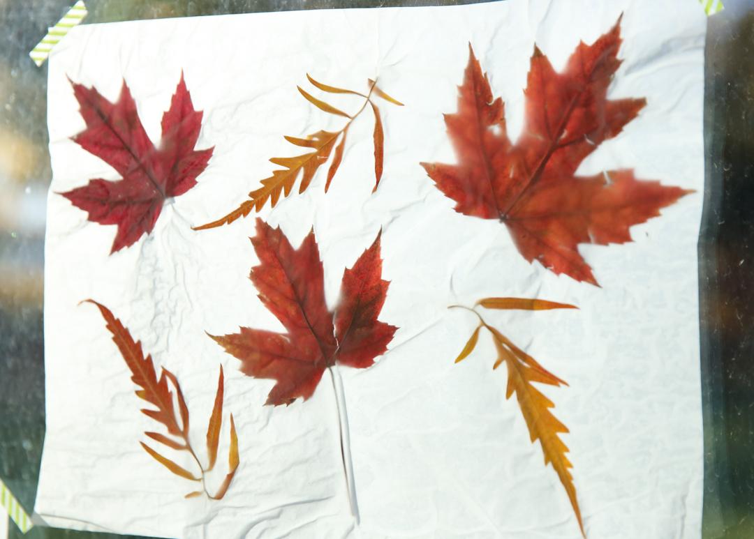 fall leaves luminaries on window